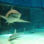 chaurum_aquarium_2015_ossi_stock (11)