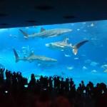 chaurum_aquarium_2015_ossi_stock (8)