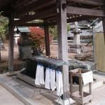 shikoku_2015_ossi_stock  (171)