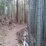shikoku_2015_ossi_stock  (215)